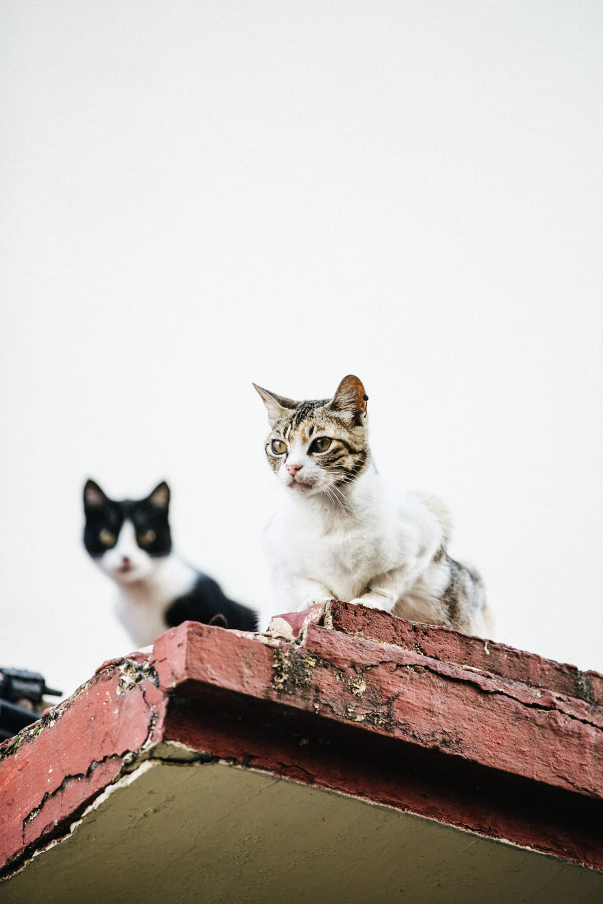 10_Katte_1545