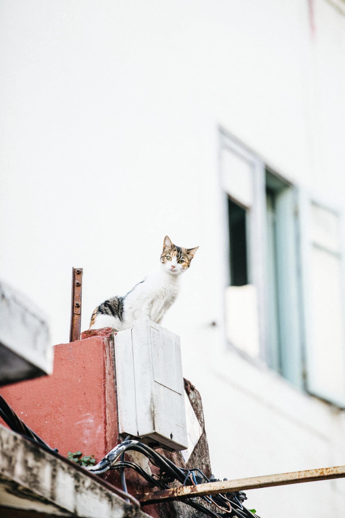 10_Katte_1563
