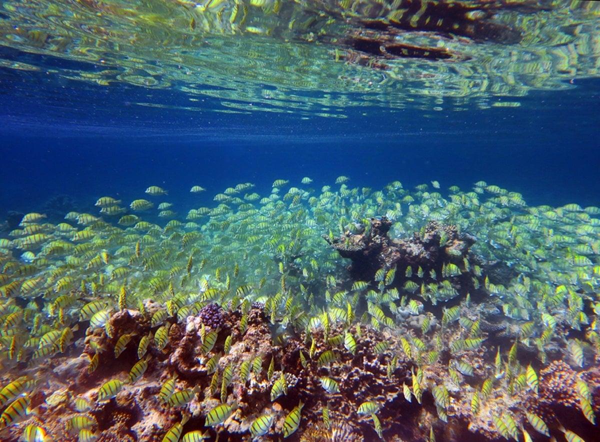 Underwater-house-reef-Soneva-Fushi-Maldives-by-Dan-Kullberg-1
