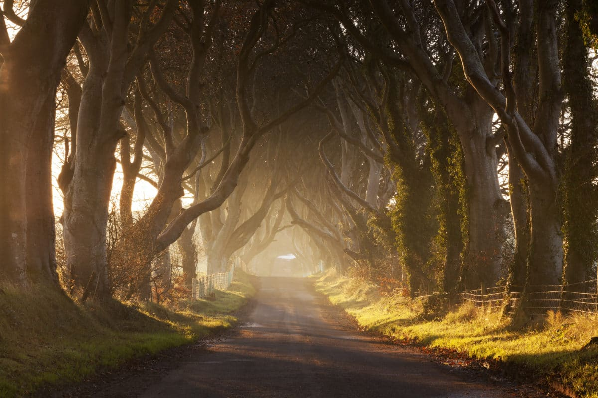 Ann-Lind-Andersen-Game-Of-Thrones - dark-hedges.jpeg