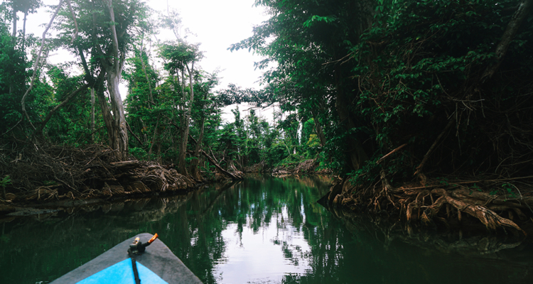 Felecool-Dominica-paradis-pa-jord - 34BBA454-F6B5-4409-A113-9A0B60E01524.jpg