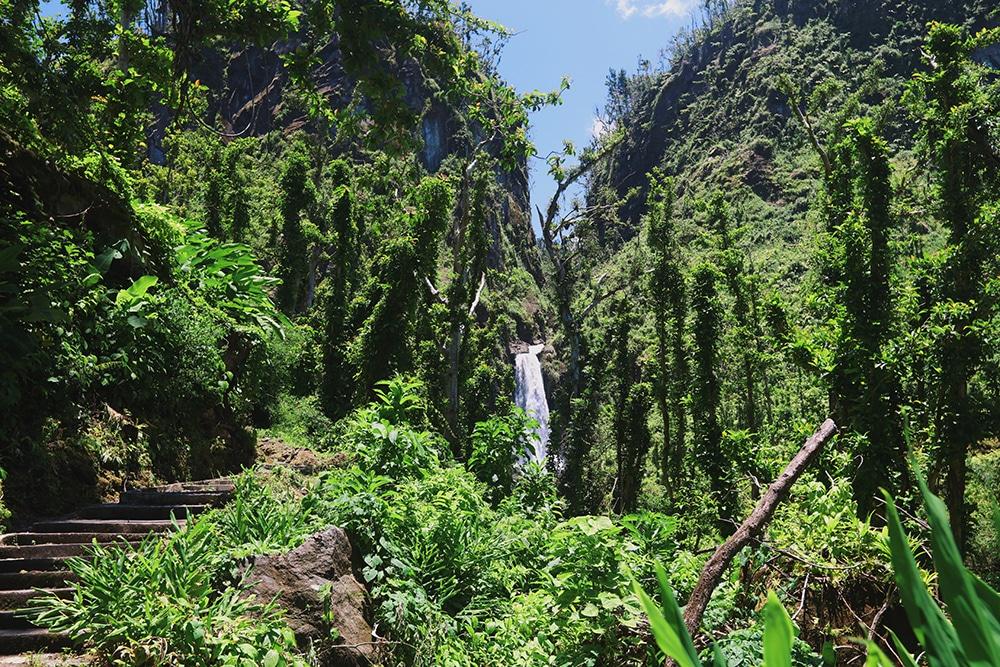 Felecool-Dominica-paradis-pa-jord - 36FB42DD-4CA4-49BA-8C67-FC11F34AF631.jpg