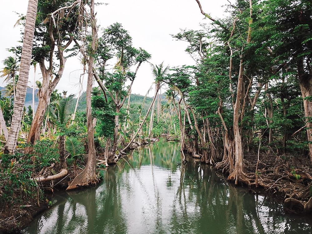 Felecool-Dominica-paradis-pa-jord - 3F9457EC-D4CF-4260-8247-5D9AD32D7259.jpg