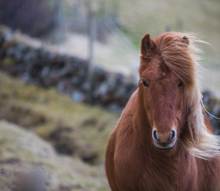 Forelsket-i-Færøerne - anhede-faroe-islands-6.jpg