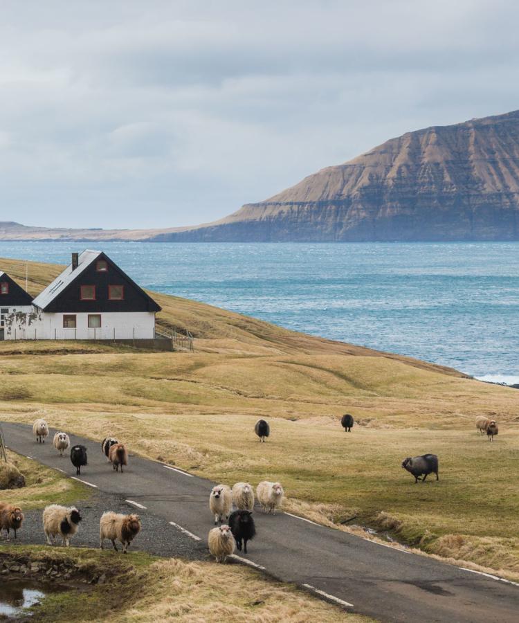 Forelsket-i-Færøerne - anhede-faroe-islands-9.jpg