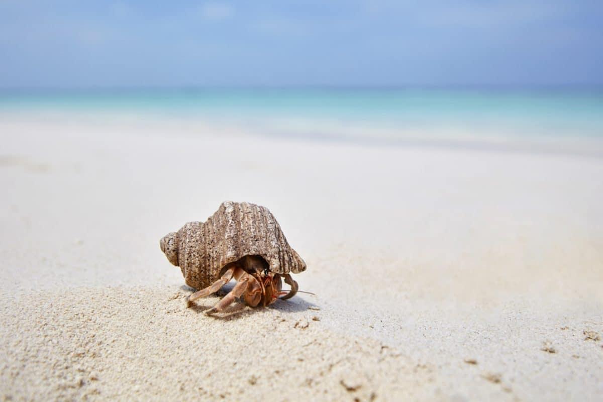 Joali,Maldiverne - JOALI-Beach-Hermit-Crab.jpg