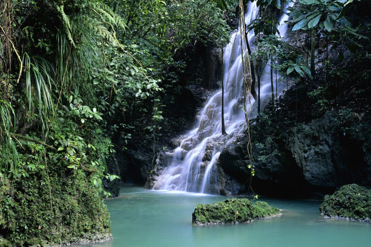 Rohan-Marley-guld-ø-Jamiaca - Jamaica-Portland.jpg