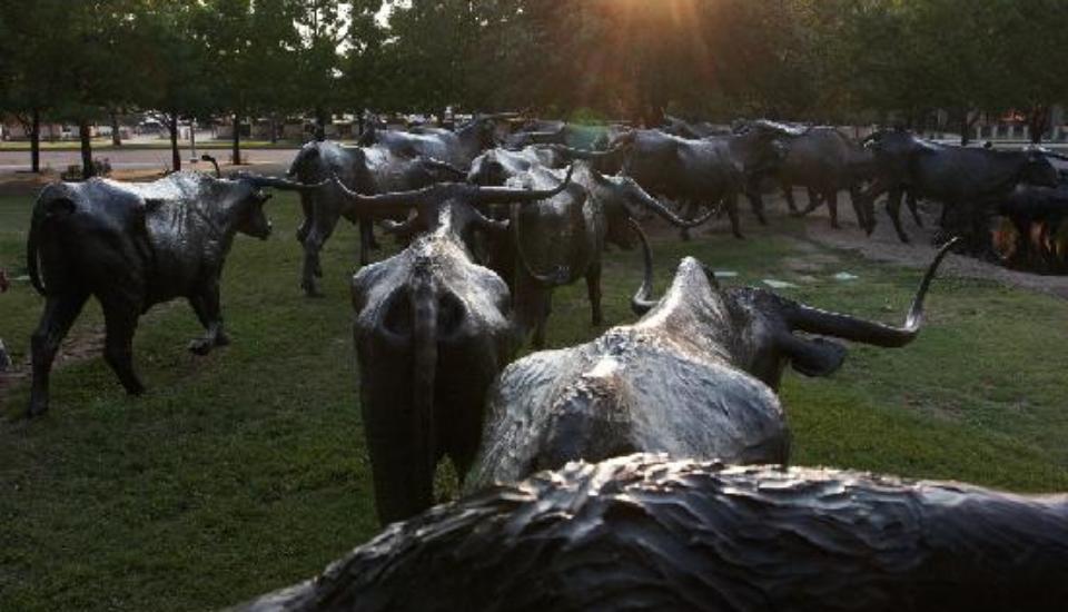 Ewings-Dallas-Felecool - view-from-a-cow.jpg
