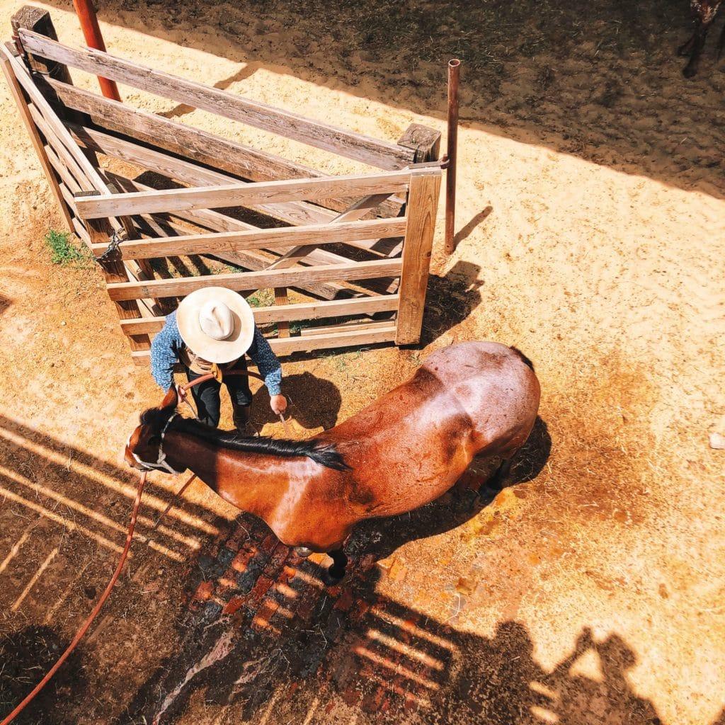FortWorth-rodeo-felecool