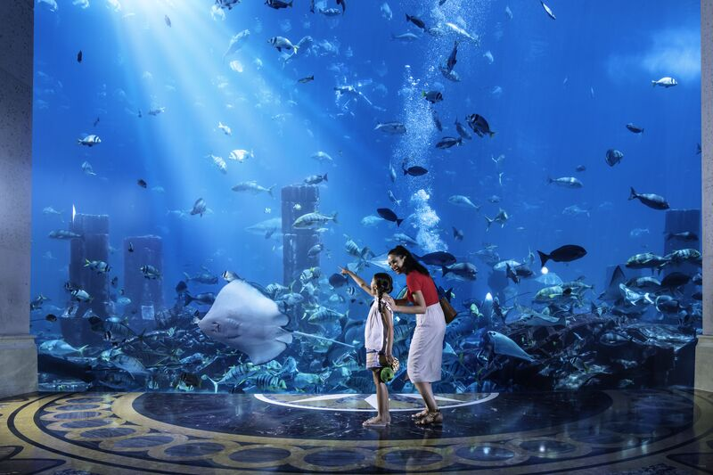familieoplevelser-i-Dubai - Medium-DT_Family_Aquarium_AtlantisResort_1_HR.jpg